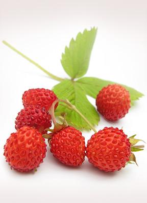 Variegated strawberries